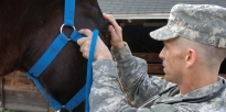 What is the Veterinary Corps?
