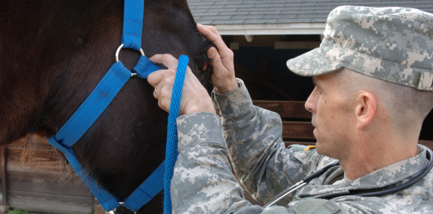 AMEDD veterinarian with horse