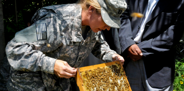 cpt mayes inspects the conditions of bee hives