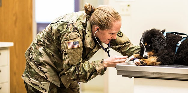 U.S. Army Animal Care Specialist evaluating a puppy.